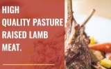 Purchase Pasture Raised New Zealand Lamb Meat Online